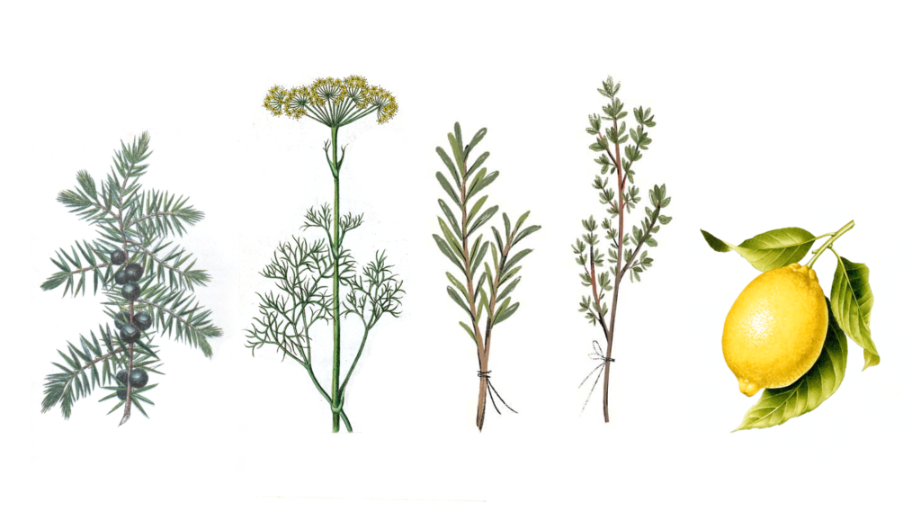 botanicos